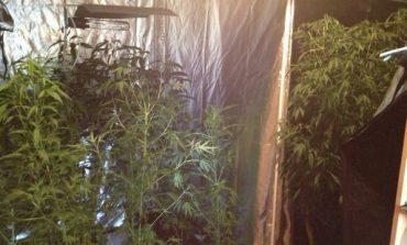 Marijuana, è tempo di legalizzarla?